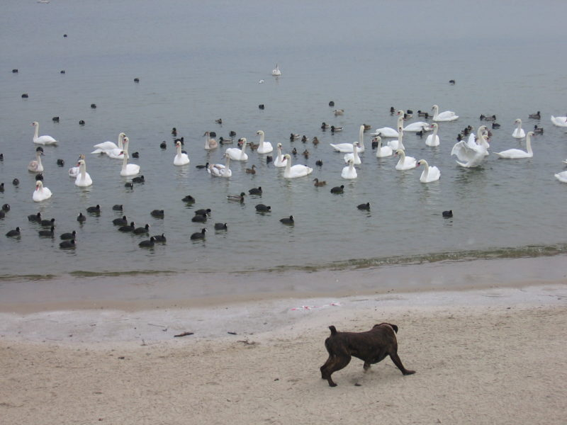 sopot-plaza-ptaki-pies