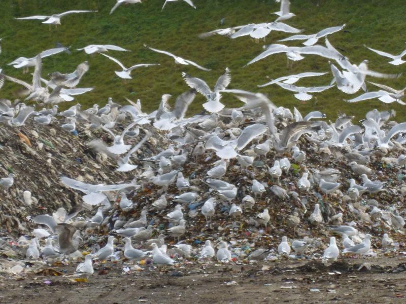 szadolki-ptaki